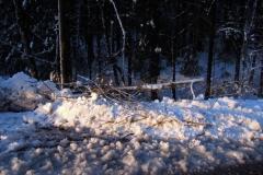 Einsatz 15.12.2017 - Baum Lässer (1)