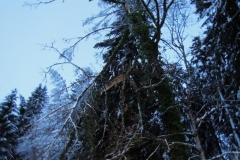 Einsatz 15.12.2017 - Baum Lässer (4)