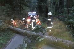 Einsatz 24.09.2018 - Baum Wirtatobel (6)
