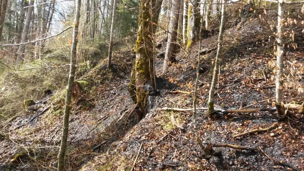 Einsatz 16.04.2015 - Waldbrand Doren (5)-klein